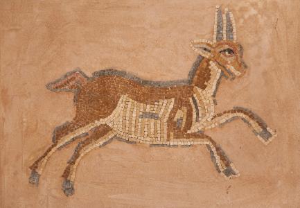 Gazelle Jordan