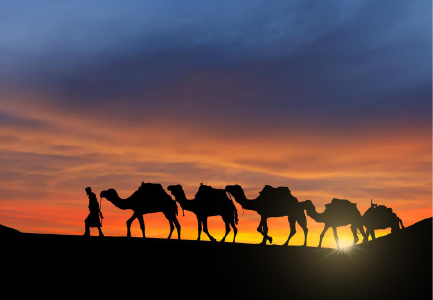 Karak Camels